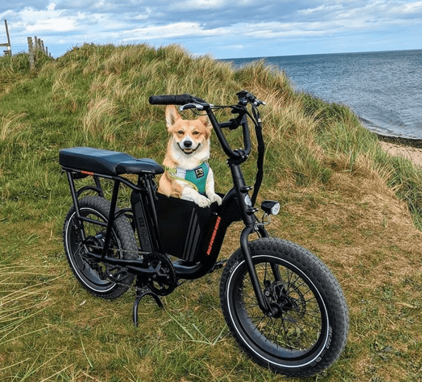 Rad-Power-Bikes-and-Dog